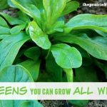 9 Greens You Can Grow All Winter Long