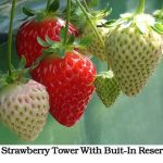 DIY Strawberry Tower With Buit-In Reservoir