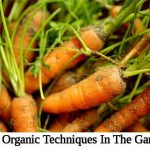 30+ Organic Techniques In The Garden