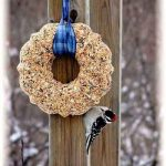 How to Make a Bird Seed Wreath