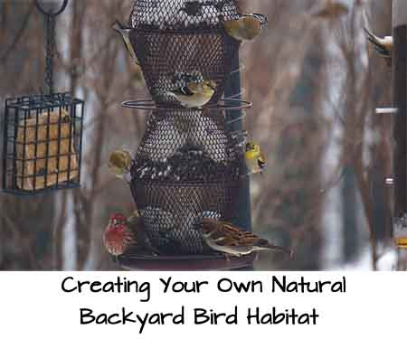 Creating Your Own Natural Backyard Bird Habitat Todd Pe Via Flickr