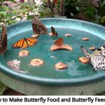 How to Make Butterfly Food and Butterfly Feeders