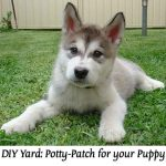 DIY Yard: Potty-Patch for your Puppy