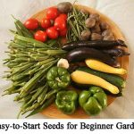 17 Easy-to-Start Seeds for Beginner Gardeners