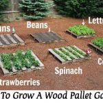 How To Grow A Wood Pallet Garden