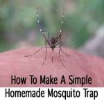 How To Make A Simple Homemade Mosquito Trap