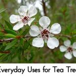 25 Everyday Uses for Tea Tree Oil