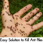Easy Solution to Kill Ant Piles