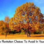 11 Tree Plantation Choices To Avoid In Your Yard