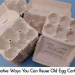 Creative Ways You Can Reuse Old Egg Cartons
