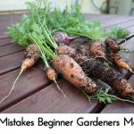15 Mistakes That Beginner Gardeners Make