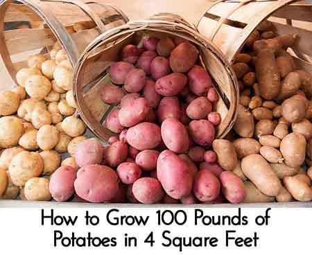 United Soybean Board via Flickr