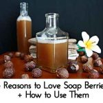 5 Reasons to Love Soap Berries + How to Use Them