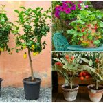 Grow At Home In Containers