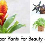 12 Easy Indoor Plants For Beauty & Clean Air