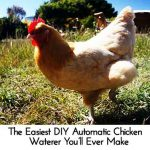 The Easiest DIY Automatic Chicken Waterer You'll Ever Make
