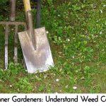 Beginner Gardeners: Understand Weed Control