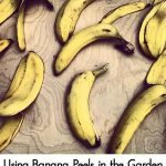 Using Banana Peels in the Garden