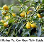 Small Bushes You Can Grow With Edible Fruit