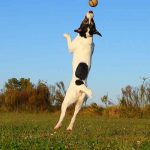 Summer Activities for Dogs