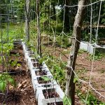 How to Build a Trellis on a Budget