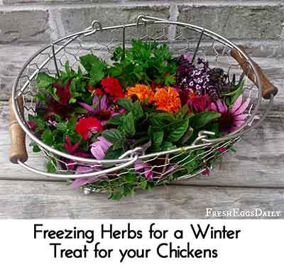 Image credit: fresheggsdaily.com