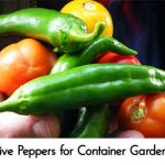 Five Peppers for Container Gardens