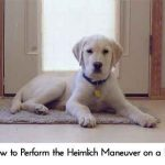 How to Perform the Heimlich Maneuver on a Pet