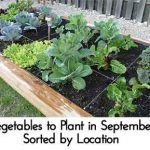 Vegetables to Plant in September – Sorted by Location