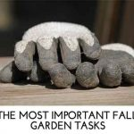 THE MOST IMPORTANT FALL GARDEN TASKS
