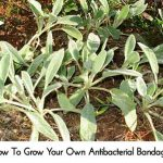 How To Grow Your Own Antibacterial Bandages