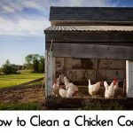 How to Clean a Chicken Coop