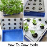 How To Grow Herbs In A Hydroponic Raft System