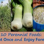 10 Perennial Foods: Plant Once and Enjoy Forever!
