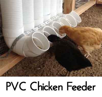 Image: backyardchickens.com