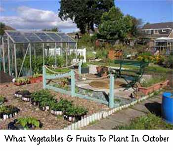 Image: allotment-garden.org