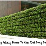 15 Living Privacy Fences To Keep Out Nosy Neighbors