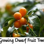 Growing Dwarf Fruit Trees