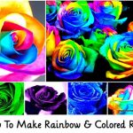 How To Make Rainbow & Colored Roses