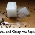 Natural and Cheap Ant Repellants