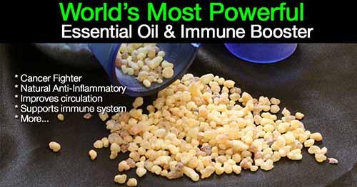 Image: bestplants.com