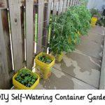DIY Self-Watering Container Garden
