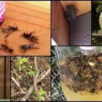7 Effective Ways To Have A Wasp Free Summer