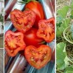 20+ Easy and Effective DIY Tricks for Gardening
