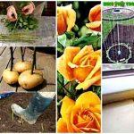 24 Clever Gardening Tricks & Tutorials