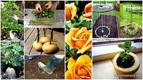 Image: homesthetics.net