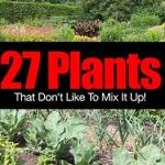 27 Plants That Don't Like To Mix It Up!
