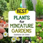 Best Plants For Miniature Gardens (Resource Guide)