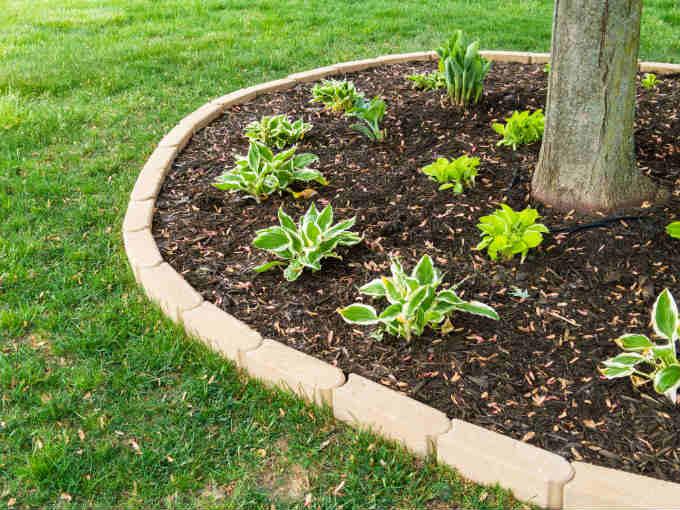 Transplant Hostas in Your Yard