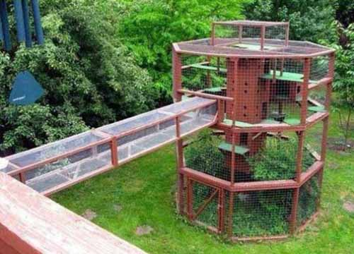 51 Outdoor Cat Enclosures Your Cat Will Love